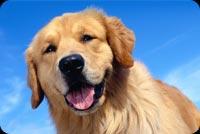 Chú Chó Mỉm Cười Vui Vẻ Mẫu Nền Thư