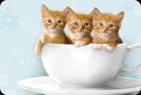 3 Chú Mèo Con Trong Tách Trà Mẫu Nền Thư