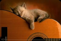 Mèo Con Ngủ Trên Đàn Guitar Mẫu Nền Thư