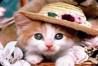 Mèo Con Đội Nón Dễ Thương Mẫu Nền Thư