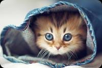 Mèo Con Trốn Trong Ống Quần Jean Mẫu Nền Thư