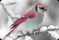 Chú Chim Lẻ Loi Giữa Mùa Đông Mẫu Nền Thư