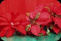 Màu Sắc Của Giáng Sinh Mẫu Nền Thư