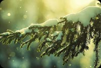 Cành Thông Phủ Tuyết Trắng Mẫu Nền Thư