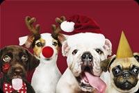 Các Chú Chó Mừng Giáng Sinh Mẫu Nền Thư