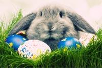 Thỏ Con Đáng Yêu Happy Easter Mẫu Nền Thư