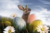 Thỏ Easter Bên Quả Trứng & Hoa Mẫu Nền Thư