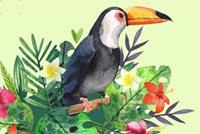 Chim Quí Mẫu Nền Thư