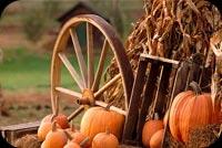 Quả Pumpkin Mẫu Nền Thư