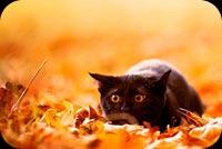 Mèo Con Nằm Trên Lá Thu Mẫu Nền Thư