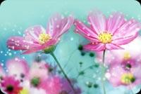 Hoa Nở Tuyệt Đẹp Mẫu Nền Thư