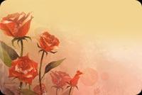 Tặng Bạn Cả Vườn Hoa Hồng Mẫu Nền Thư
