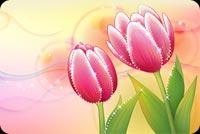 2 Đóa Hoa Tulip Đón Mùa Xuân Mẫu Nền Thư