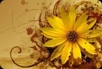 Hoa Vàng Ấm Cúng Mẫu Nền Thư