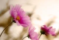 Hoa Tím Mẫu Nền Thư