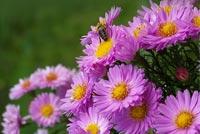 Ong Và Hoa Mẫu Nền Thư
