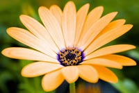 Hoa Vàng Nở Rộ Mẫu Nền Thư