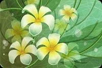 Hoa Vẽ Mỹ Thuật Mẫu Nền Thư