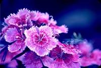 Hoa Đẹp Mẫu Nền Thư