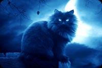 Mèo Đen Trong Đêm Trăng Mẫu Nền Thư