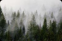Sương Trắng Phủ Khắp Rừng Thông Mẫu Nền Thư