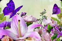 Bướm Tím Và Hoa Xuân Mẫu Nền Thư