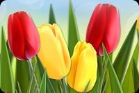 Hoa Tulip Mẫu Nền Thư