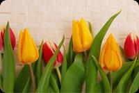 Hoa Tulip 2 Mẫu Nền Thư