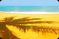 Bóng Cây Dừa Trên Cát Vàng Mẫu Nền Thư