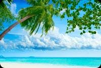 Cây Dừa Biển Xanh Cát Vàng & Mây Mẫu Nền Thư