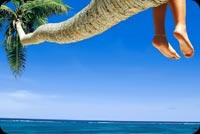 Ngồi Trên Cây Dừa Ngắm Biển Xanh Mẫu Nền Thư