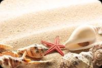 Sao Biển Vỏ Ốc Trên Cát Mẫu Nền Thư
