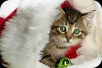 Mèo Con Dễ Thương Mẫu Nền Thư