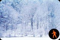 Ảnh Động Cảnh Tuyết Phủ Hồ Băng Mẫu Nền Thư