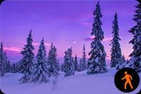 Ảnh Động Tuyết Rơi Rừng Thông Mẫu Nền Thư